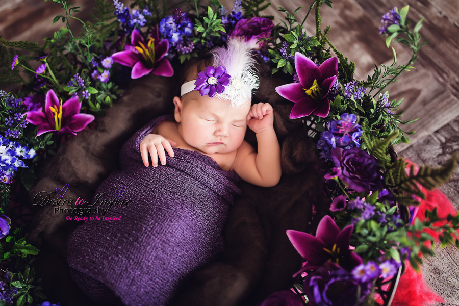 Brisbane Newborn Photographer 11022014 (2)