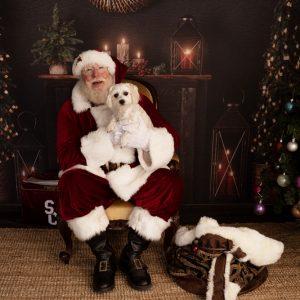 , Pet Santa Sessions – Heathwood Studio, Brisbane Birth Photography
