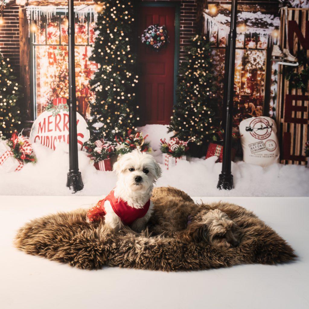 , Christmas Mini Sessions, Brisbane Birth Photography